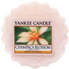Yankee-Candle-Champaca-Blossom-wosk-zapachowy-drogeria-internetowa-puderek.com.pl